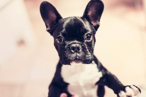 animal-dog-pet-cute-large